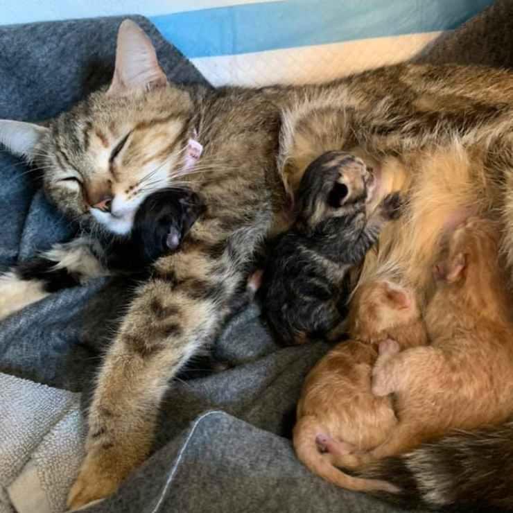mamma gatto e piccoli