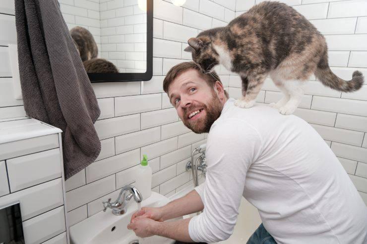 gatti hanno addomesticato uomini