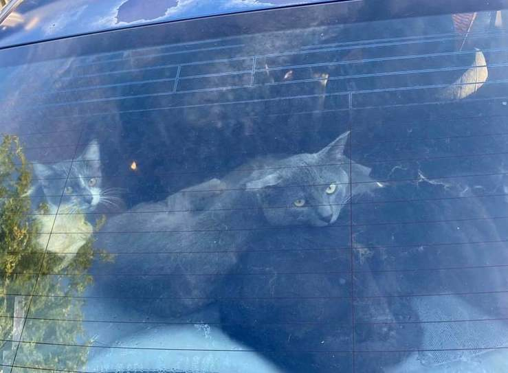24 gatti salvati da una automobile
