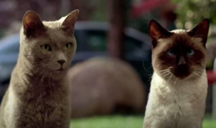 gatti in Garfield