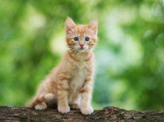 Quando portare fuori il gattino per la prima volta: l'età corretta per il gatto