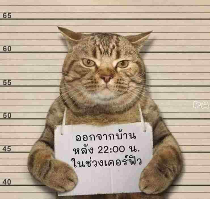 gatto arrestato