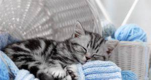 Come far vivere felice il gatto da interno