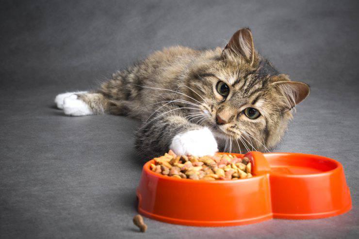 Il gatto può mangiare i funghi?