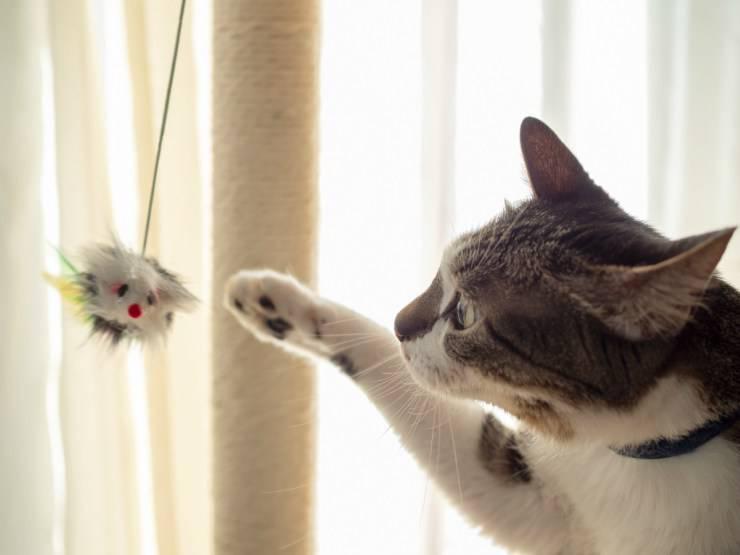 Oggetti pericolosi per il gatto