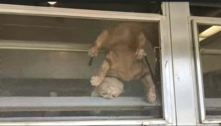 gatto tenta di evadere