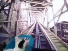 gatto simulatore montagne russe