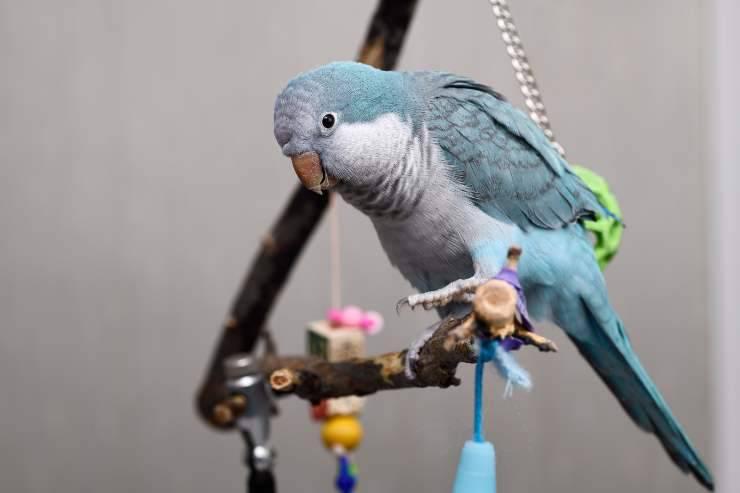 giocattoli fai da te per uccelli