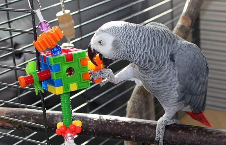 giocattolo pappagallo