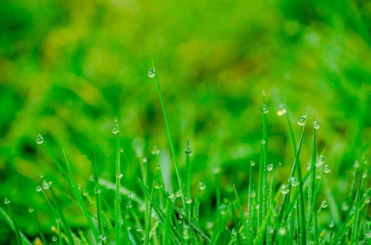 L'erba del prato (Foto Pixabay)