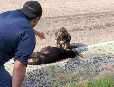 adottato cane vegliava compagna