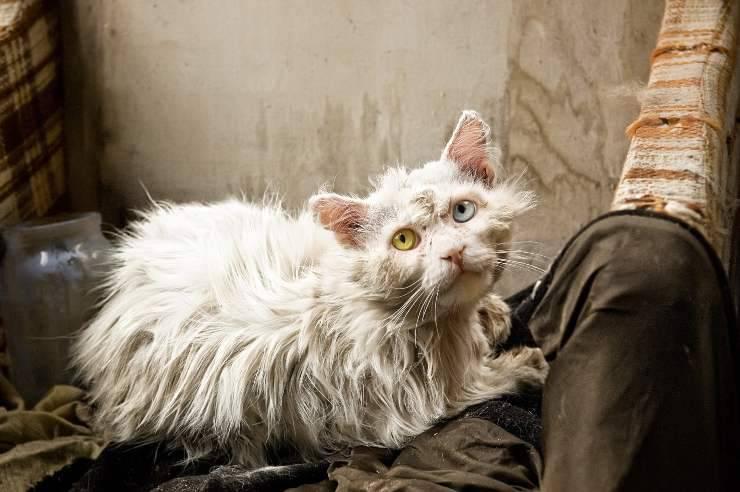 il gatto non si lava
