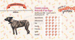 Cimarron Uruguayo scheda razza