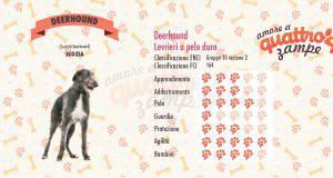 Deerhound scheda razza