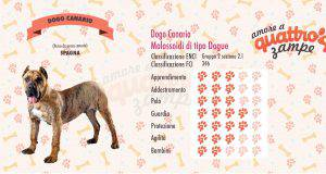 Dogo Canario scheda razza