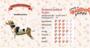 Dansk-svensk gardshund scheda razza