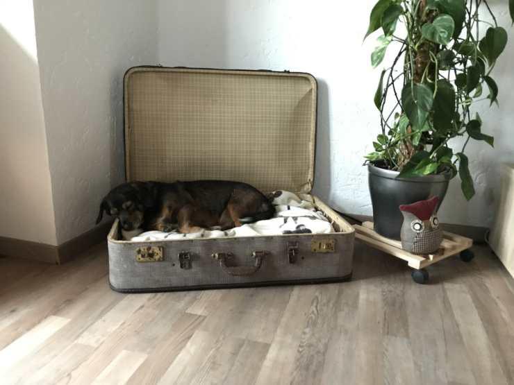 volo consentito cani