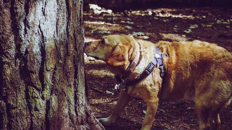 Come gli odori di casa influiscono sul cane