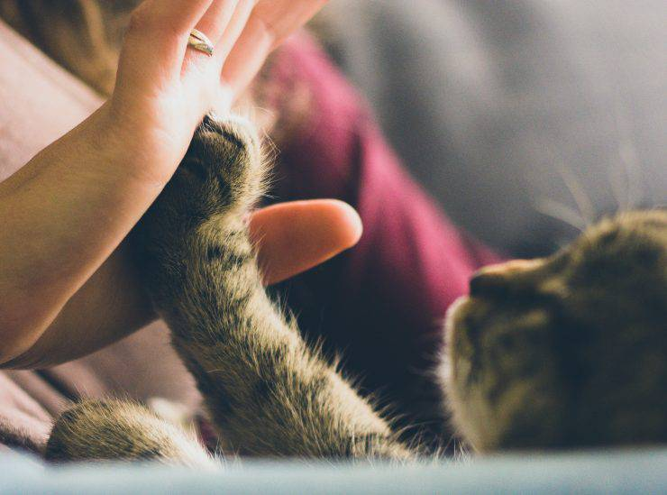Giochi da fare con il gatto