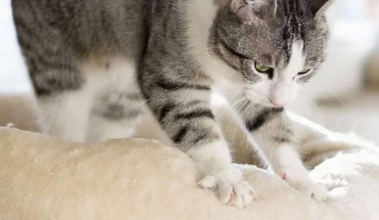 gatti impastano fare pasta