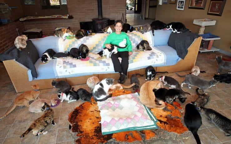 la donna che ha rinunciato a tutto per i gatti