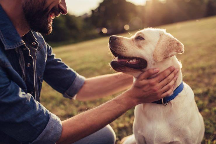 A linguagem corporal de cachorro do homem