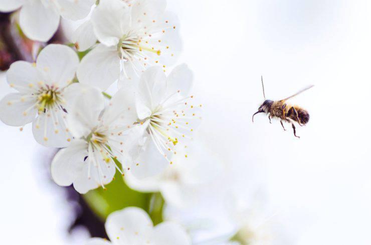 Salvare le api
