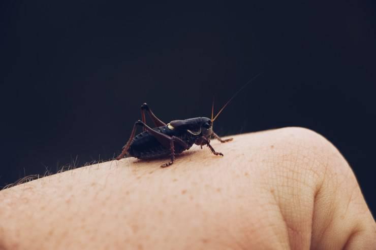 Addestrare gli insetti per un film