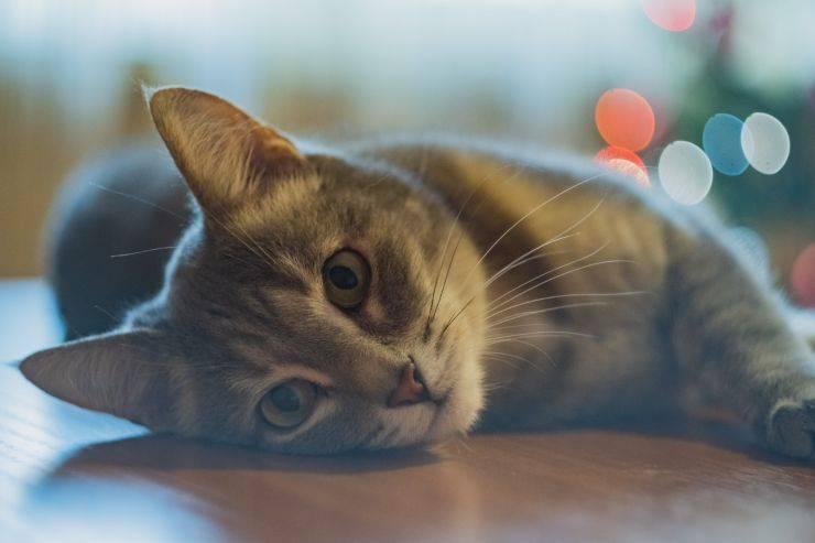 malattie neurologiche gatto