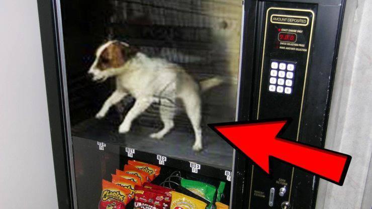 distributori automatici cane