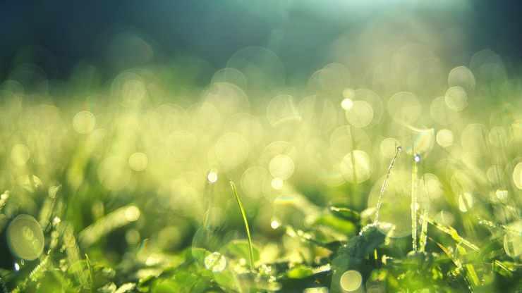 Il prato verde (Foto Pixabay)
