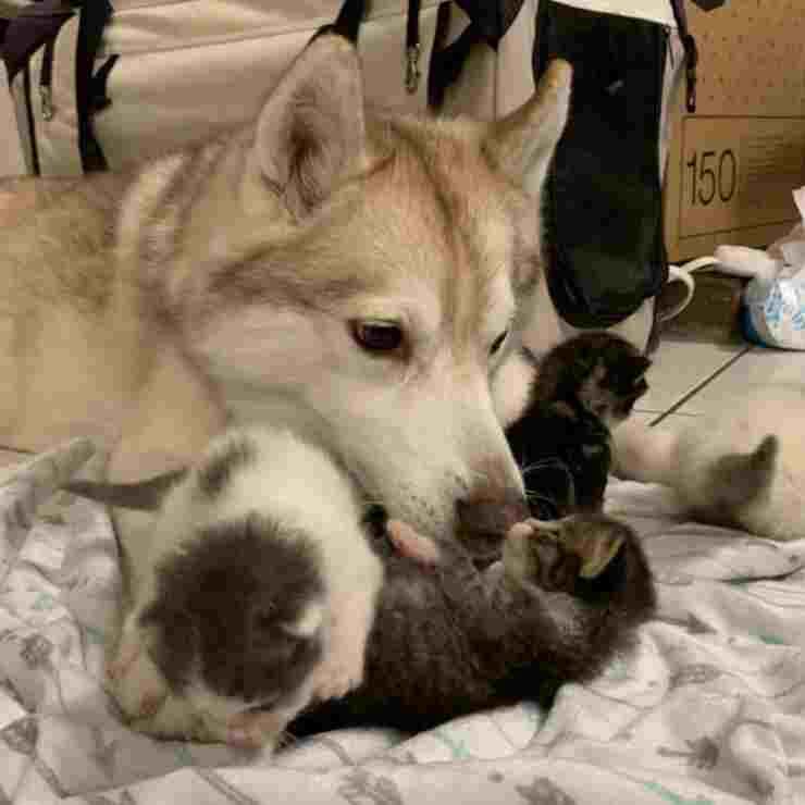 gattini cane mamma