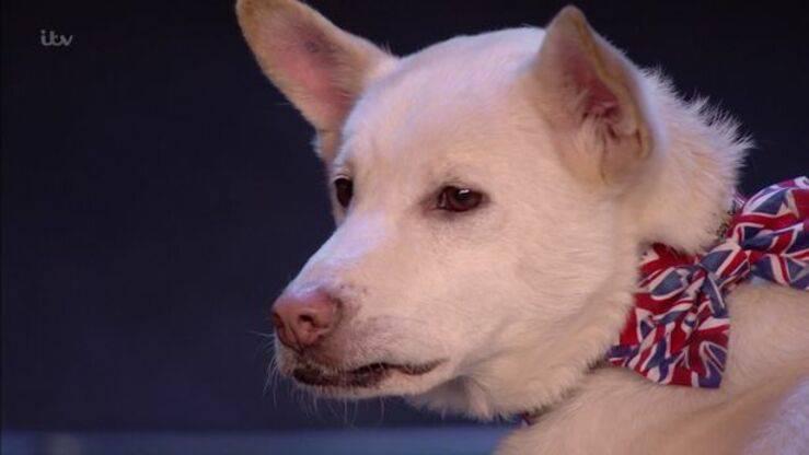 Miracle il cane salvato dal macello