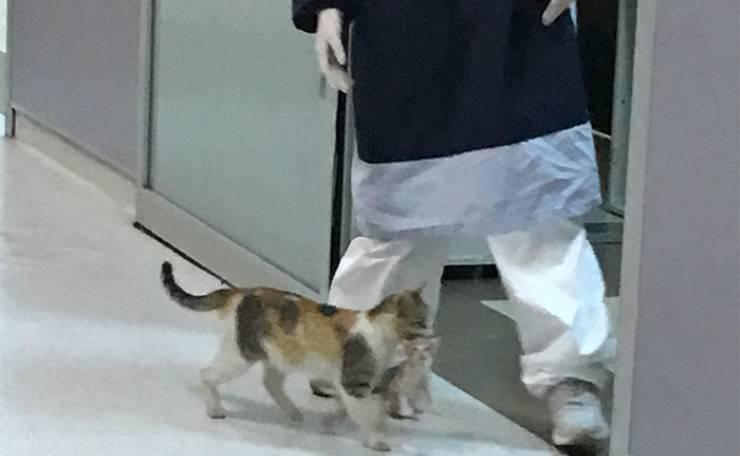 mamma gatta gattino ospedale