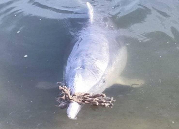 delfino porta dono ai visitatori