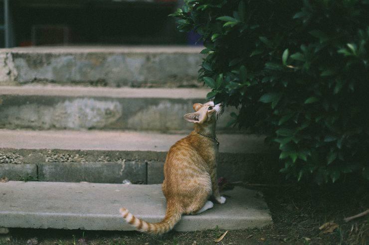 Gatto annusa tutto