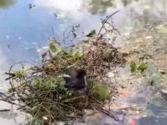 uccello aiutare costruire nido