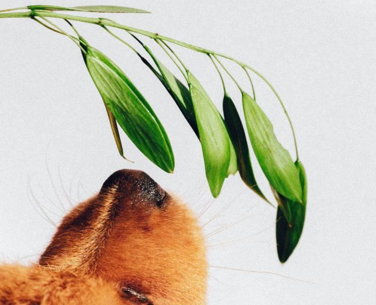 Odori di casa influiscono sul cane