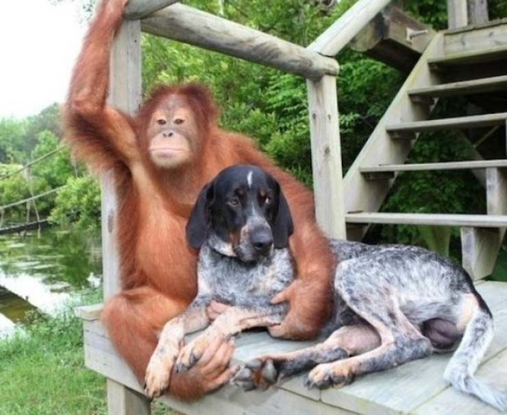 orango tanto e cane amicizie animali
