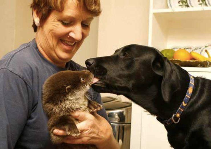 Cane e lontra