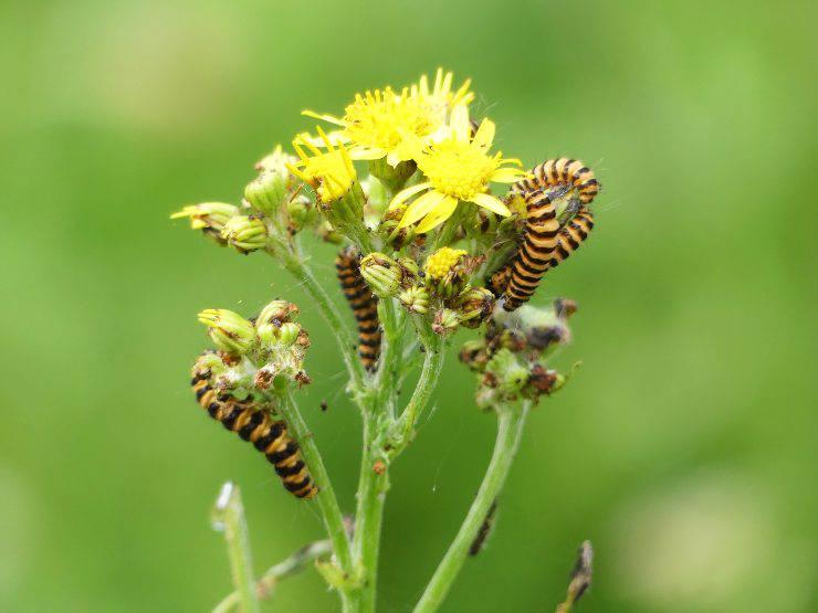 Piante per insetti