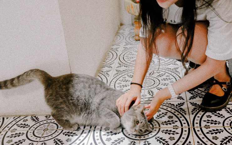 Gatti che amano le coccole