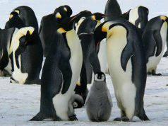 pinguini credenze sugli animali