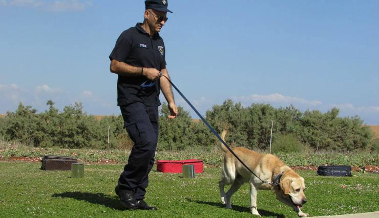 Il cane poliziotto (Foto Pixabay)