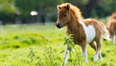quanto costa pony