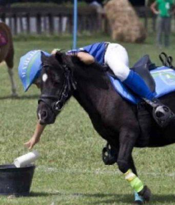 razze pony scuola equitazione