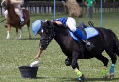 razze pony sportivi