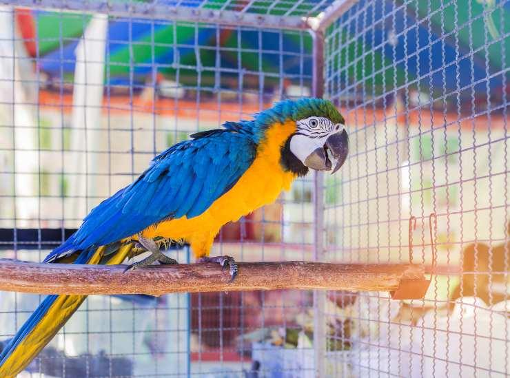 posatoio pappagallo