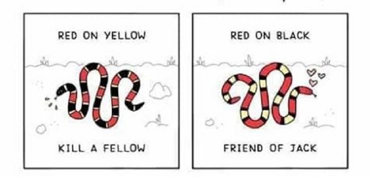 serpenti velenosi