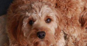 rimedi naturali pelo cane